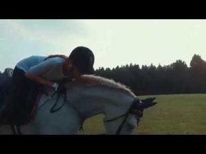 behandlung sommerekzem pferd